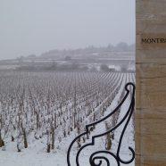 White Burgundy & Champagne